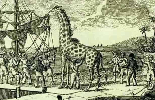 2048x1536-fit_zarafa-premiere-girafe-france-lors-embarquement-alexandrie-1826