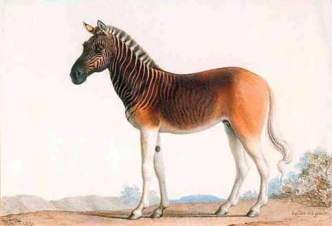 extinct-zebras
