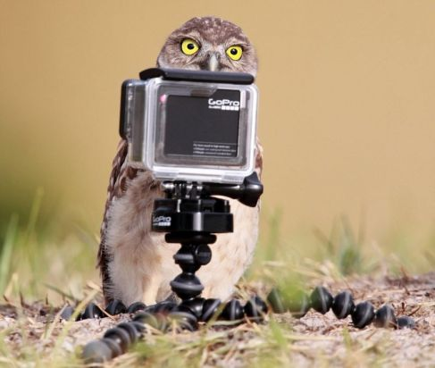 curious-owl-comedy-wildlife-photography-awards-2016-shortlist
