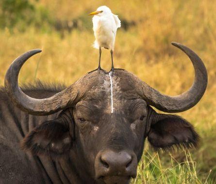 pooping-bird-comedy-wildlife-photography-awards-2016-shortlist