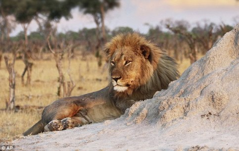jericho-lion-brother-cecil