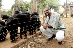 Bala with chimps.jpg
