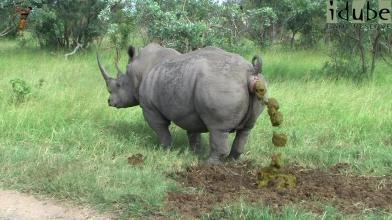 rhino-caca