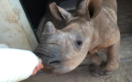 baby-rhino-thula-thula