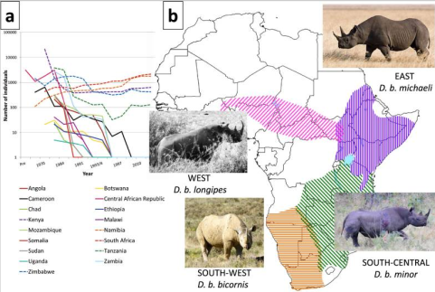 évolution des populations de rhinoceros noirs