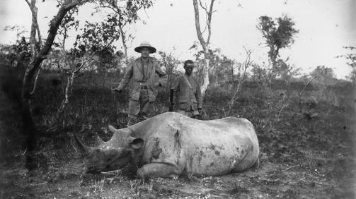 rhinoceros chasse kenya