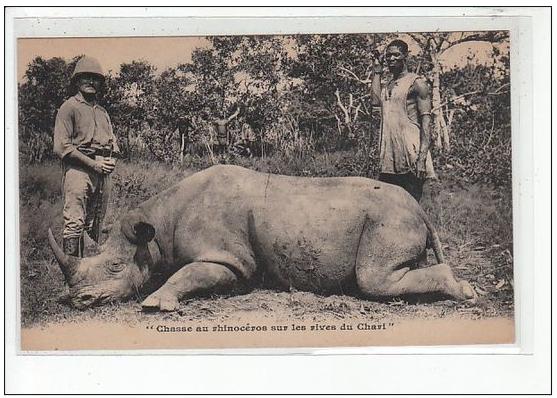 rhinoceros Tchad