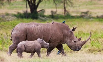 rhinos-sanwild-1074x644