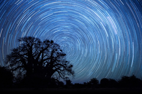 Star Trails Over Chapman's Baobab