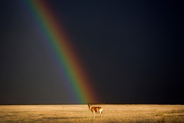 End of the rainbow in Maasai Mara National Reserve, Kenya Björn Persson