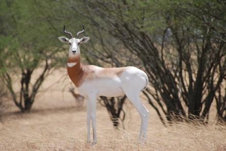 gazelle-image-06
