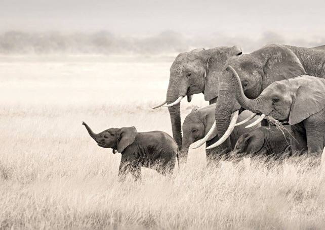 Leading the family in Amboseli National Park, Kenya par Astrid Diana Fernandes