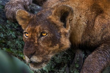 Panos-Laskarakis-Tanzania
