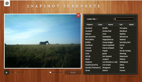 snapshot serengeti.png