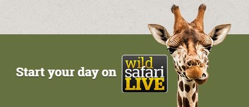 wild safari live