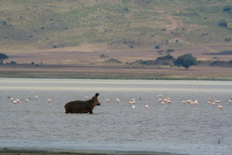 lac Magadi au fond du Ngorongoro