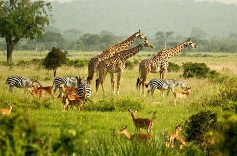 murchison-wildlife