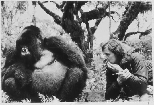 Dian Fossey et Digit le gorille.jpeg