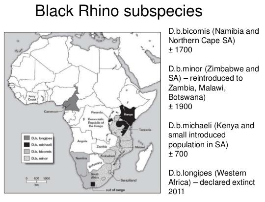 rhinoceros sous espece