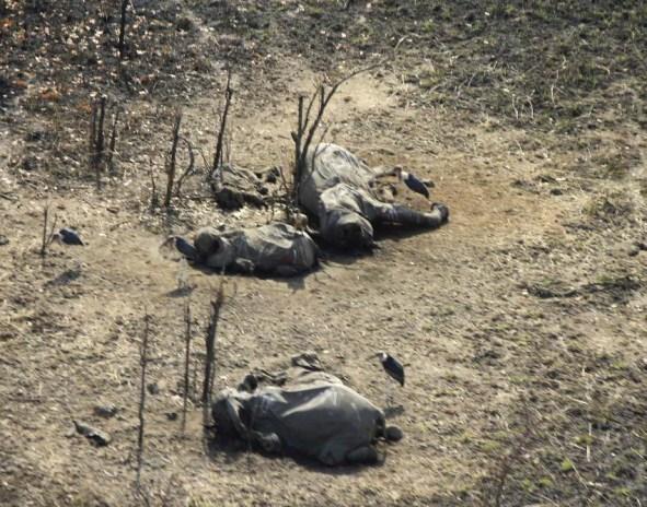 massacre boubandjida IFAW.jpg